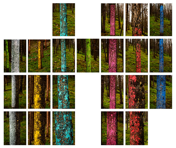 tree-lines-grid-Final