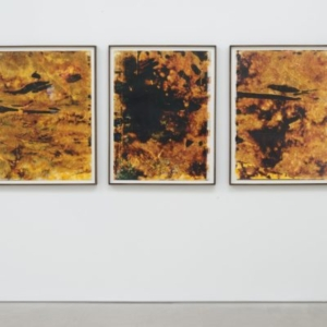Ryan Foerster, Hurricane - Shaw, Julie, Jimmy, 2006 - 2012, C-print, debris, 3 elements, 43 x 33 inches each, overall dimensions variable
