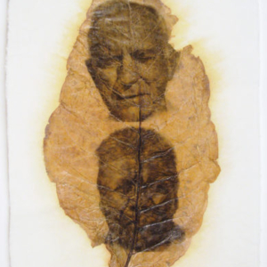 Accra Shepp, Elders (Douglas GA), 2008, photo emulsion on leaf, 32 1/2 x 18 inches