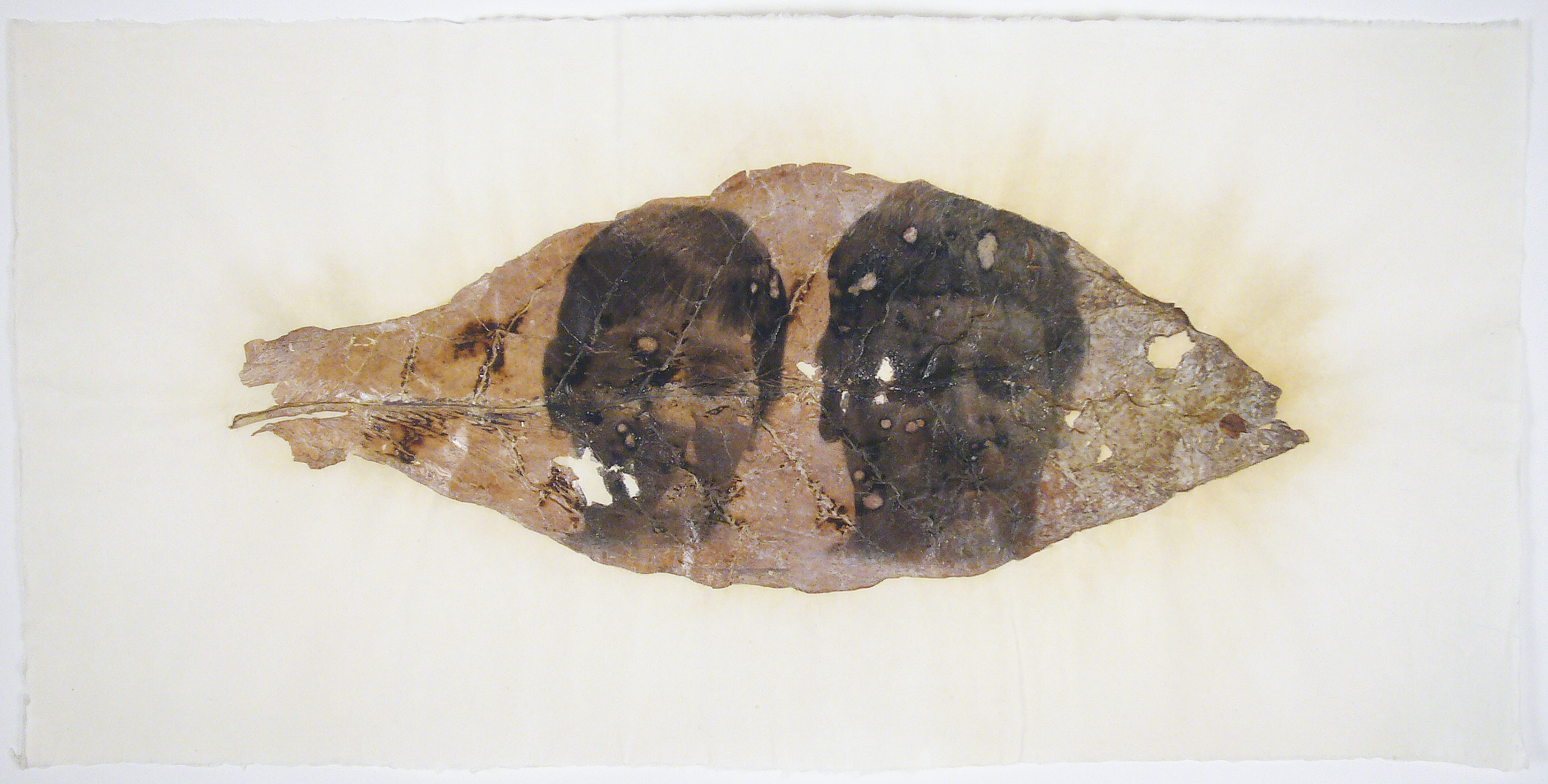 Accra Shepp, Mother and Son (Philpot KY), 2006, photo emulsion on tobacco leaf, 35 x 15 inches