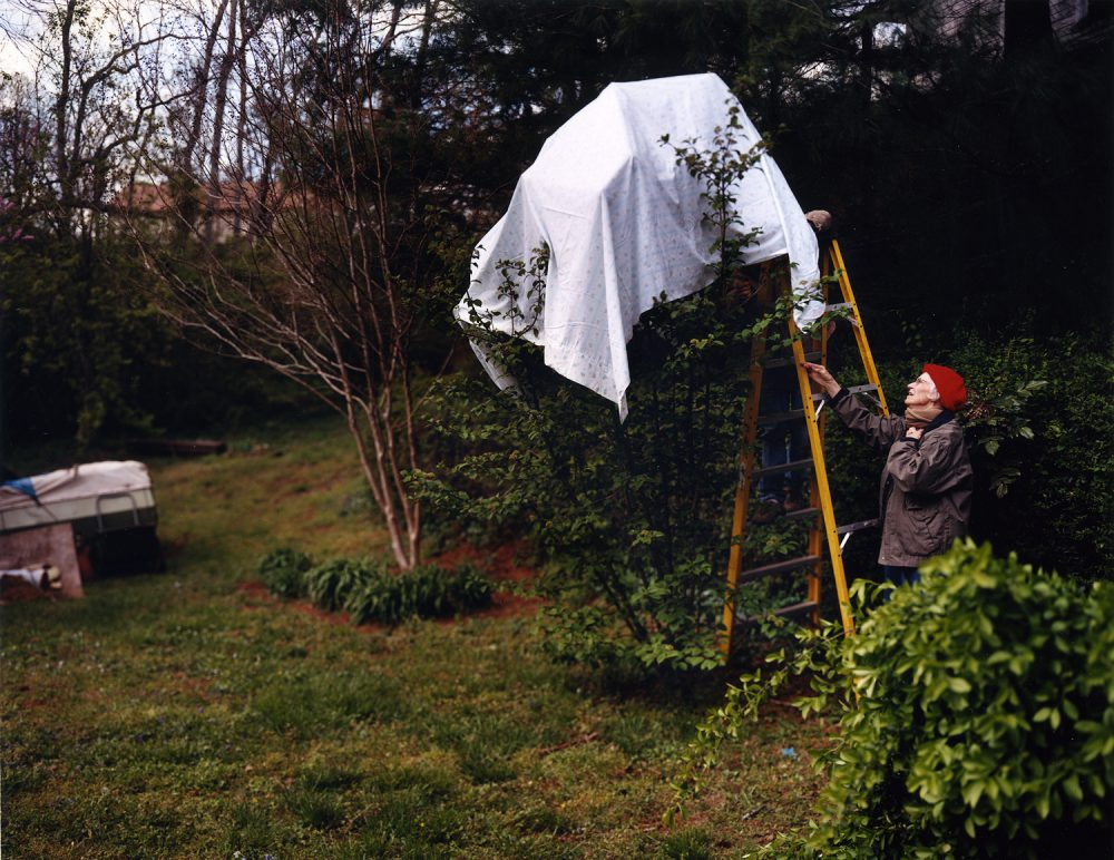 Angela West, Blackberry Winter: from the series My 33rd Spring, 2003, cibachrome, 50 x 60 inches