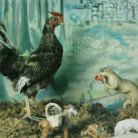 Amy Blakemore, Rooster, 2012, chromogenic print, 12 x 12 inches
