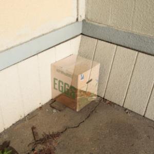 Cayetano Ferrer, Keep Refrigerated Eggs, 2009, cardboard, inkjet print