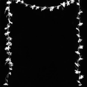 J John Priola, Daisy Chain, 1997, gelatin-silver print, 48 x 38 inches framed, from the series Residual