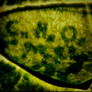 Robbie Land, Grant Park (Photosynthesis), 2015, still from 16mm film