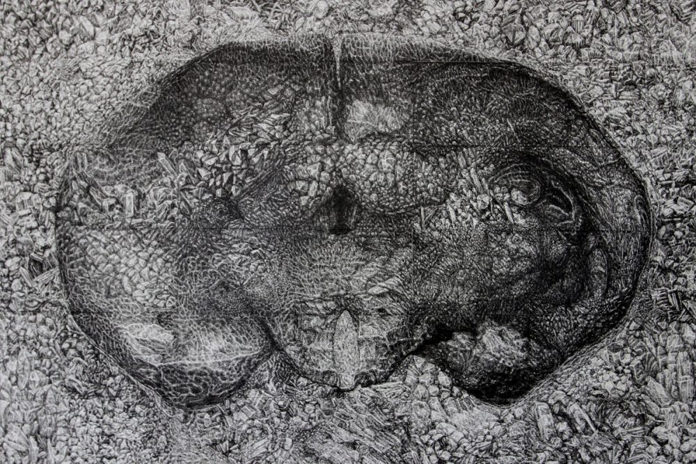 Xiaowei Chen, Fossil, 2014, ink line on paper, 25 x 32 inches