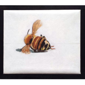 Philip von Zweck, Dead Bee, 2015, acrylic and oil on canvas, 9 x 11 inches
