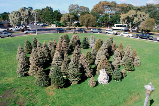 Allison Wiese, Clearing, 2011, variable dimensions, discarded Christmas trees, Camino Field, University of San Diego. Image courtesy of www.allisonwiese.com