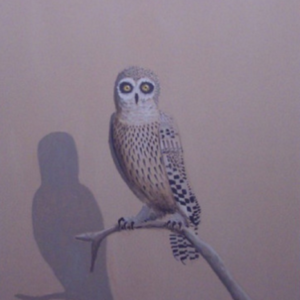 Joe Baldwin, Owl with Shadow, 2002, oil on canvas, 50 x 40 inches
