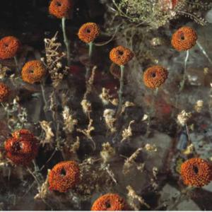 Tom Denlinger, Wetlands, Chr46a, 2002, pigmented inkjet, 40 x 50 inches