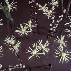 Tom Denlinger, Wetland_imaginary, pn_d, 2000, Cibachrome, 40 x30 inches
